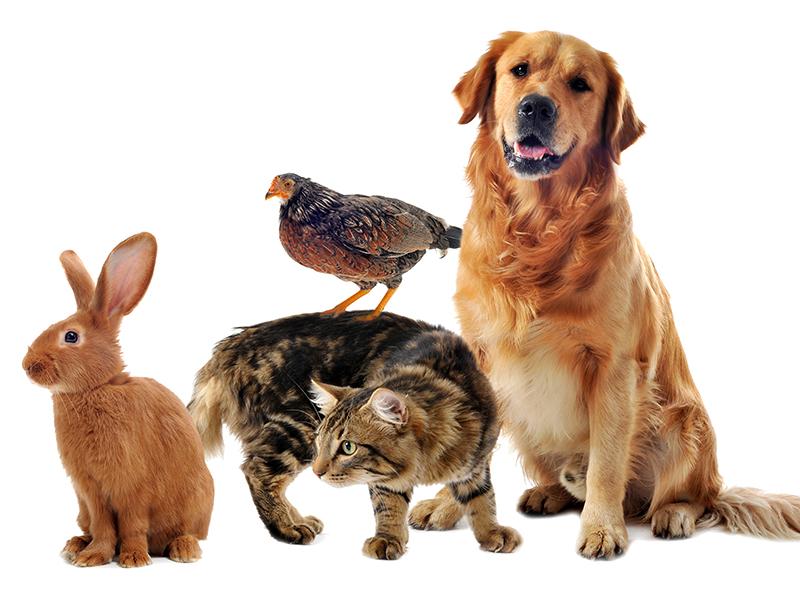 Per animali